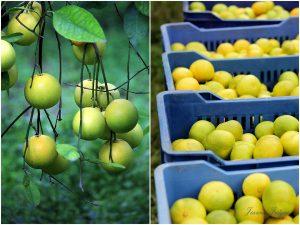 likier pomarańczowy,